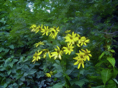 Mixed Media - Flock Of Green-eyed Susans Coming In For A Landing by Robert J Sadler