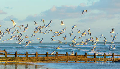 Seagulls Photograph - Flock Of Seagulls Flying Over The Sea by Geoff Smith