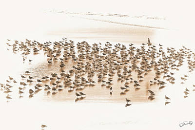Photograph - Flock Of Seagulls On Sandy Beach by Dee Browning