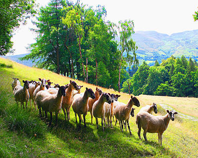 Photograph - Flock Of Sheep In The English Hills by YoursByShores Isabella Shores