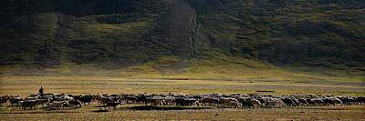 Flock Of Sheep Art Print by Konstantin Dikovsky
