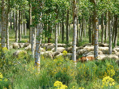 Photograph - Flock Of Sheep With A Goat by Valerie Ornstein