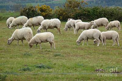 Flock Of Sheeps Art Print by Jean Bernard Roussilhe