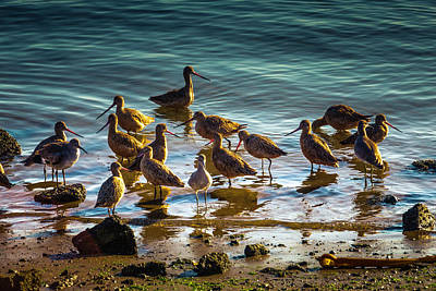 Gathering Photograph - Flock Of Shorebirds by Garry Gay