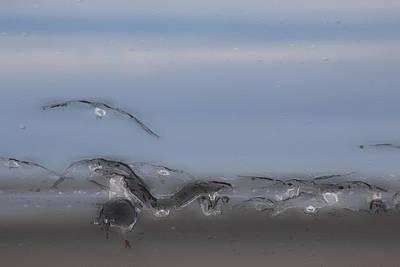Troupeau Photograph - Flocked by Judy Bernier