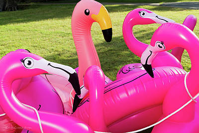 Photograph - Flocking Flamingo by Erich Grant