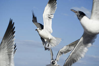 Jak Photograph - Flocking Mess by Jack Norton