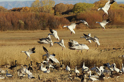 Photograph - Flocking Together by Leda Robertson