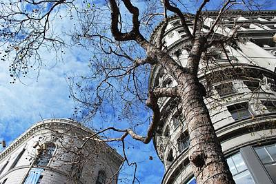 Photograph - Flood Building And Bank Building - San Francisco - Angled Tree View by Matt Harang