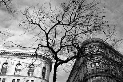 Photograph - Flood Building And Bank Building - San Francisco - Tree View - Black And White by Matt Harang