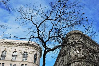 Photograph - Flood Building And Bank Building - San Francisco - Tree View by Matt Harang