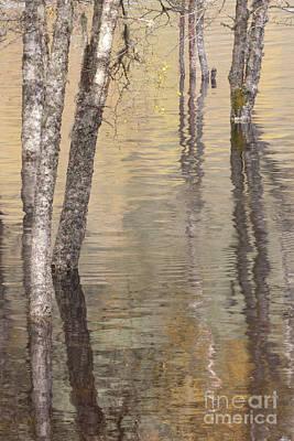 Photograph - Flooded Forest - Loch Beinn A'mheadhon by Karen Van Der Zijden