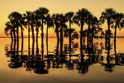 Photograph - Flooded Lake Sunrise by Stefan Mazzola