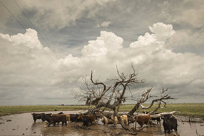 Flooding Photograph - Flooded Pastures by Chris Harris