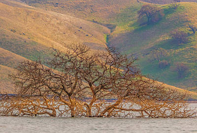 Photograph - Flooded Tree And Hillside by Marc Crumpler