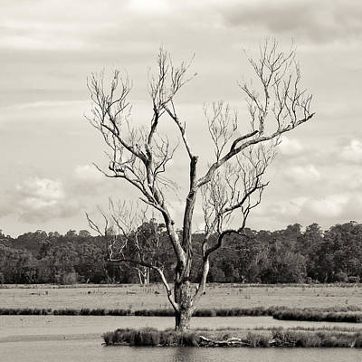 Photograph - Flooded Tree by Nicholas Blackwell