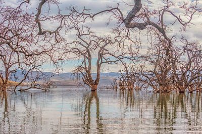 Photograph - Flooded Trees At Los Vaqueros by Marc Crumpler