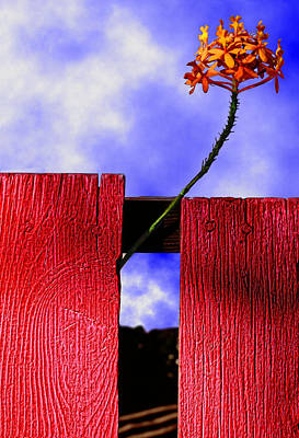 Weed Digital Art - Flora And The Red Fence by Paul Wear