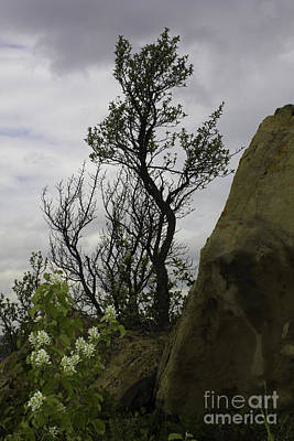 Photograph - Flora And Tree by Donna L Munro