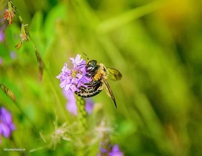 Photograph - Flora Bee Buzz by LeeAnn McLaneGoetz McLaneGoetzStudioLLCcom