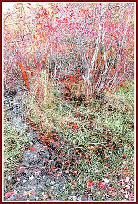 Photograph - Flora In A Marsh Edge, Autumn by A Gurmankin