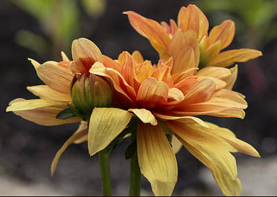 Photograph - Floral 1 by Ron Grafe