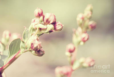 Photograph - Floral 13 by Andrea Anderegg