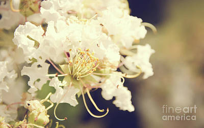Photograph - Floral 14 by Andrea Anderegg