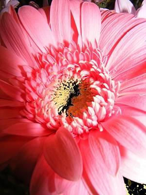 Floral 41 Art Print by Chuck Landskroner