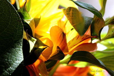 Photograph - Floral Abstract No2 by Kume Bryant