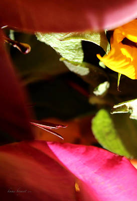 Photograph - Floral Abstract No6 by Kume Bryant