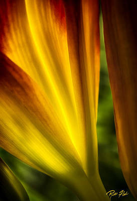 Photograph - Floral Abstract by Rikk Flohr