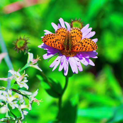 Photograph - Floral Adornment by Kent Nancollas