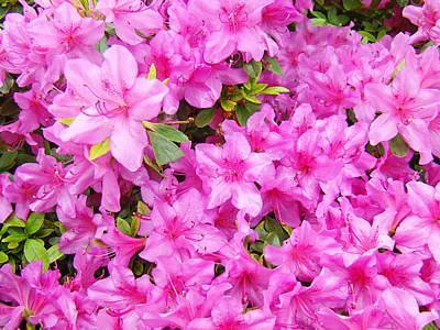 City Lights - FLORAL Art Prints Pink Azalea Garden Landscape Baslee Troutman by Baslee Troutman