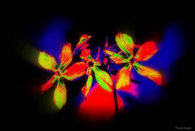 Digital Art - Floral Aurora Borealis   by Wesley Nesbitt