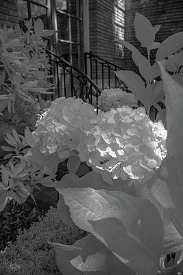 Photograph - Floral B W by Patricia Dennis