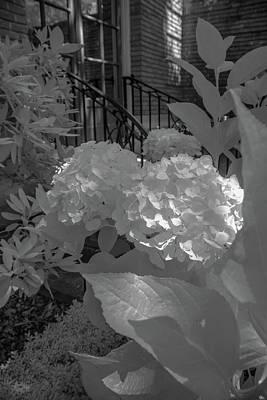 Photograph - Filoli Floral B W by Patricia Dennis