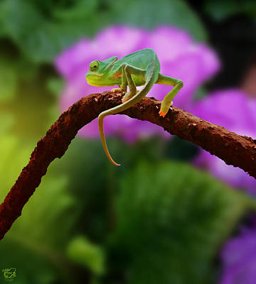 Manip Photograph - Floral Baby Chameleon by Stephen Kinsey