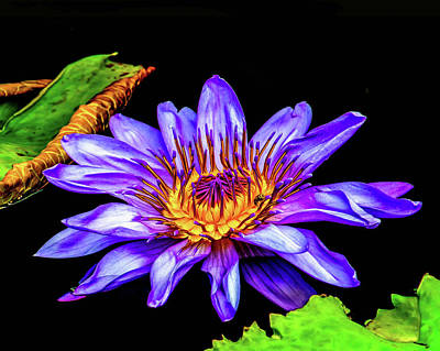 Photograph - Floral Beauty by Nick Zelinsky