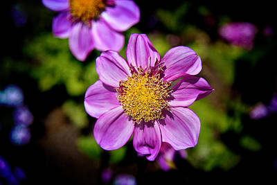 Photograph - Floral Beauty by Milena Ilieva