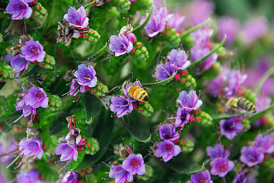 Photograph - Floral Beehive by Georgiana Romanovna