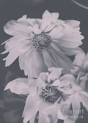 Photograph - Floral Black White 2 by Andrea Anderegg