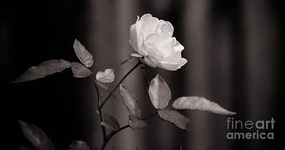 Photograph - Floral Black White by Andrea Anderegg