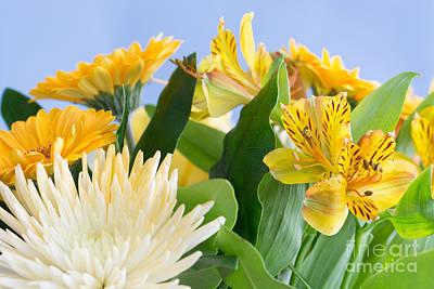 The Blue Dahlia Photograph - Floral Bouquet by Steve Purnell