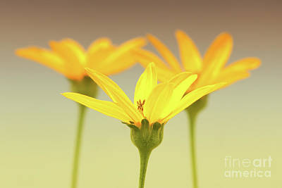 Photograph - Floral Brilliance by Anita Oakley
