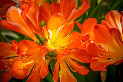 Photograph - Floral Burst by Derek Dean