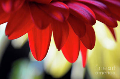 Photograph - Floral Canopy by Deb Halloran