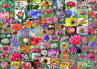 Photograph - Floral Collage  by Janice Drew