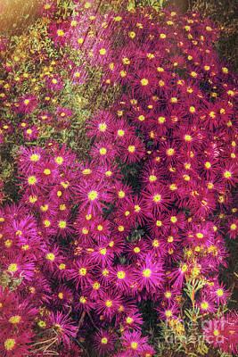 Photograph - Floral Design by Kasia Bitner