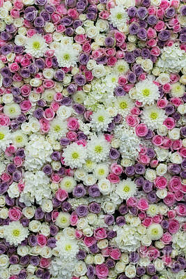 Photograph - Floral Display Wall by Tim Gainey
